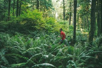 early morning jog of man running through forest.